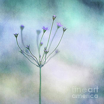 Simply flowers by Priska Wettstein