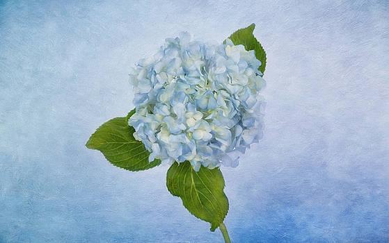 Sing Me the Blues by Kim Hojnacki
