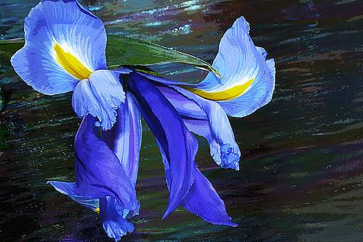 Single Blue Iris Painterly by Phyllis Denton