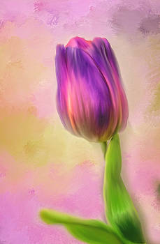 Single Tulip by Mary Timman