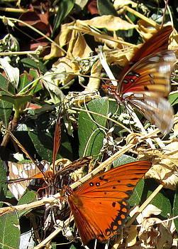 Six Butterflies Highlight by Radical Reconstruction Fine Art Featuring Nancy Wood