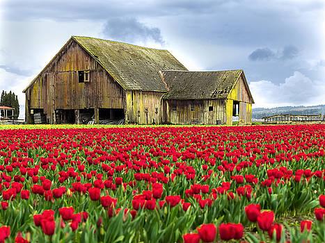 Skagit Valley Barn by Kyle Wasielewski