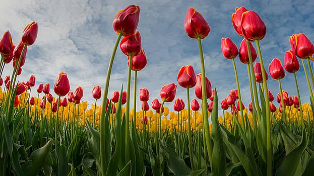Skagit Valley Spring Joy by Dan Mihai