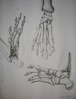 Skeletal Foot Study by Candace Barnett