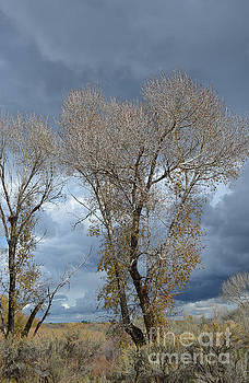 Skeleton Trees by Gale Cochran-Smith