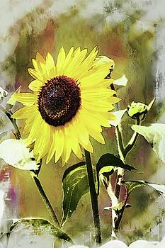 Sketchy Sunflower 3 by Marty Koch