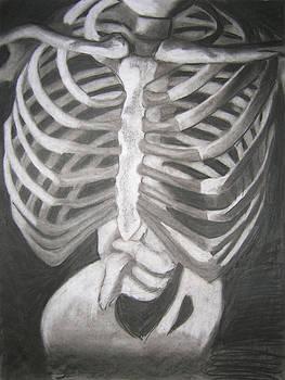 Sketetal Rib Cage Study by Candace Barnett