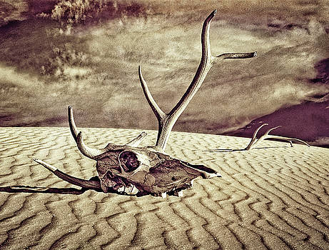 Skull and Antlers by Sandra Selle Rodriguez
