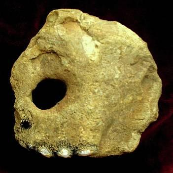 Skull by Bill Meeker
