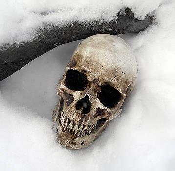 Skull on Snow by Sabrina Zbasnik