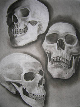 Skull Study by Candace Barnett