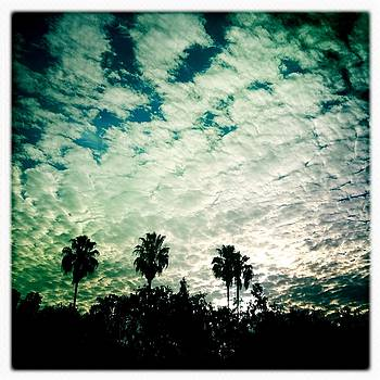 Palms and Clouds at the Gas Station by Anne Thurston