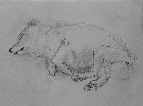 Sleeping Dog 2 by Jackie Hoats Shields