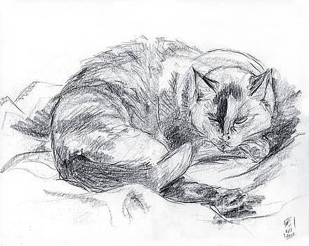Sleeping Jago by Brandy Woods
