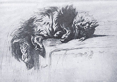 Sleeping Kitty by Henry Goode