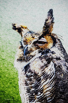 Sleepy Great Horned Owl - Paint FX by Brian Wallace