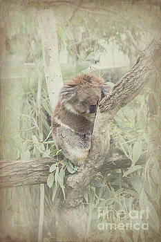Sleepy Koala by Elaine Teague