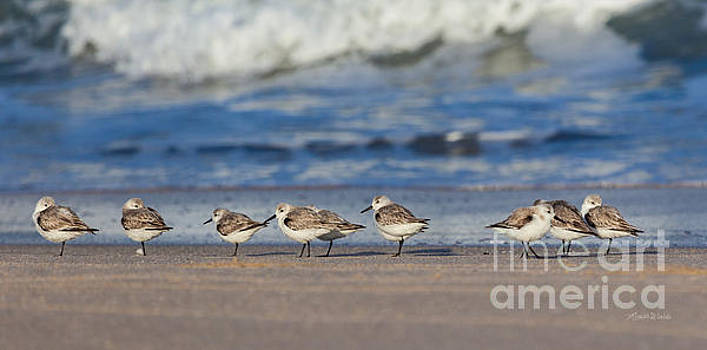 Michelle Wiarda - Sleepy Shorebirds