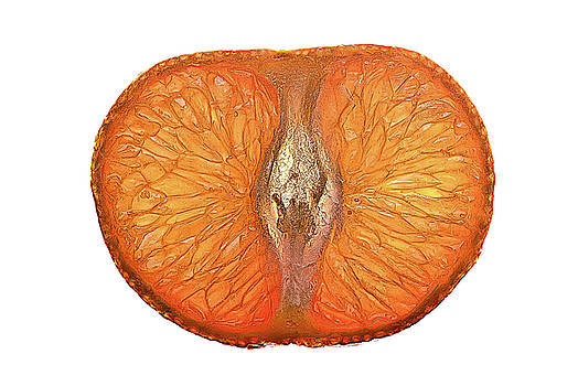 onyonet  photo studios - Slice of a Mandarin Orange