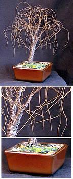 Small Bonsai Elm by Sal Villano