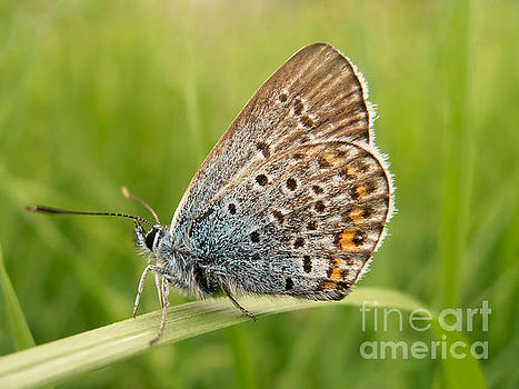 Small butterfly by Snezana Petrovic