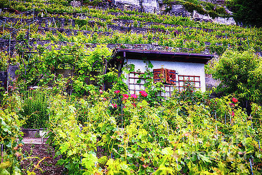 Small House in a Hillside Vineyard by George Oze