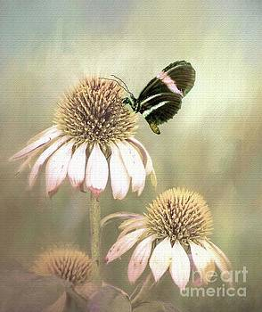 Small Postman Butterfly on Cone Flower by Janette Boyd