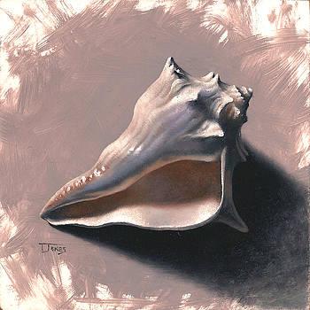 Small Seashell by Timothy Jones