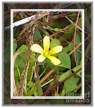 Small Yellow Flower by Shirley Moravec