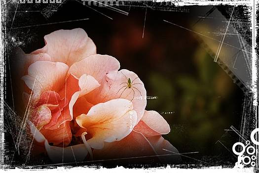 Smelling The Roses by Theresa Higby