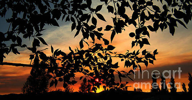 Smoked Filled Sunset by Janice Westerberg