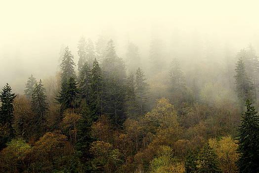 Marty Koch - Smoky Mount Horizontal