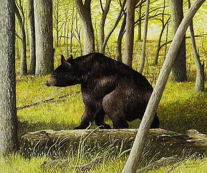 Smoky Mountain Bear by Mary Ann King