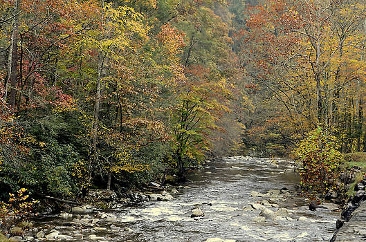 Smoky Mountian Stream by Charles Bacon Jr