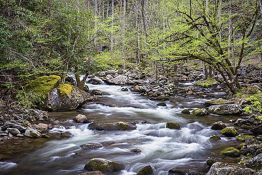 Smoky Mountian Stream in Spring by Bill Swindaman