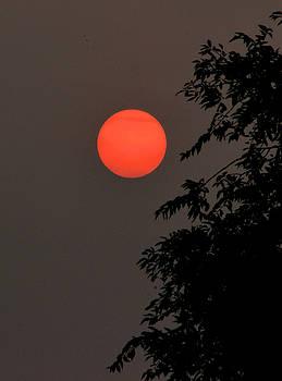 Smoky Sunset by Scott Carlton
