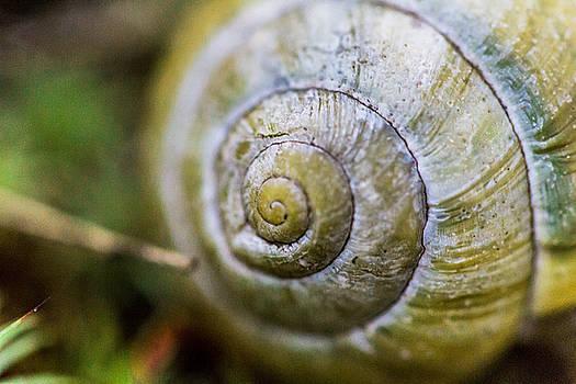 Snail Macro by Danielle Silveira