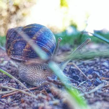 Snail by Travis Turner