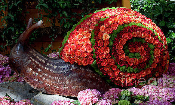 Snail with Flowers by Ivete Basso Photography