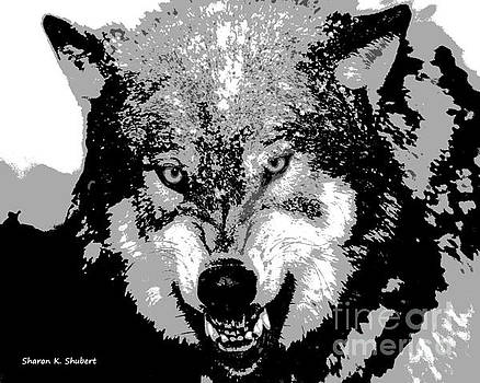 Snarling Wolf by Sharon K Shubert