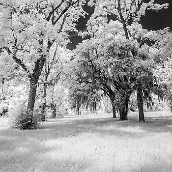 Snee Farm Inrfared Image by Mark Wagoner