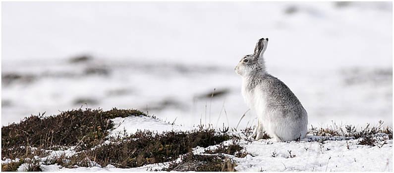 Snow a Bunny by John Fotheringham