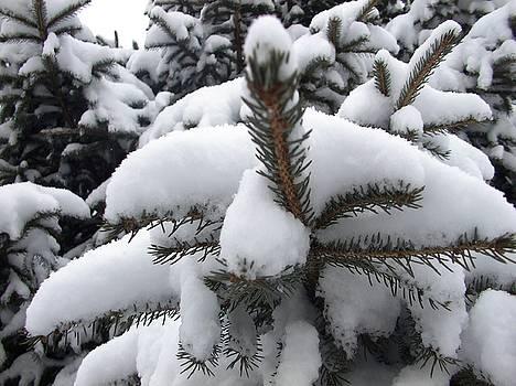 Snow Barren by Ali Dover
