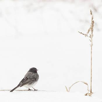 Snow Bird by Katie Abrams
