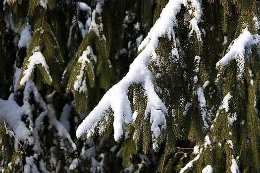 Anne Babineau - snow bough