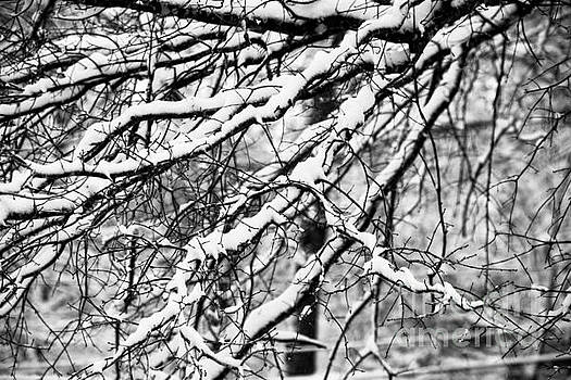 Snow Branches by JW Hanley