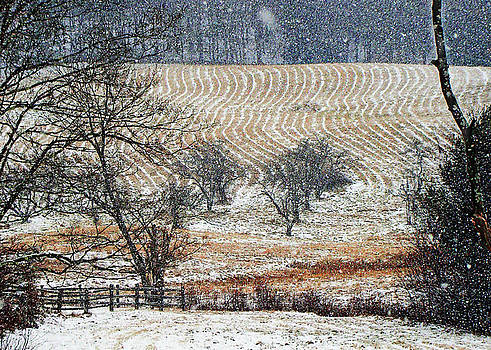Snow Contours by Betsy Zimmerli