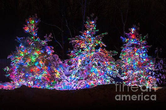 Snow Covered Christmas Trees by Patrick Shupert