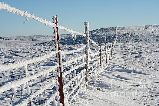 Snow covered fence line by Carole Martinez