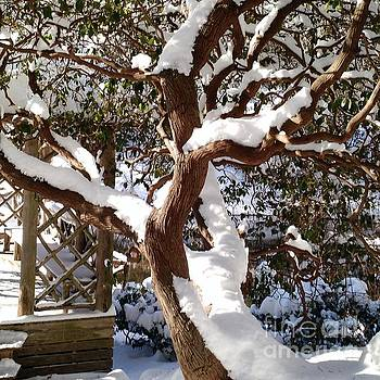 Snow covered Rhododendron by Anita Adams